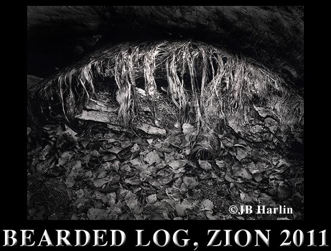 BEARDED LOG, ZION 2011