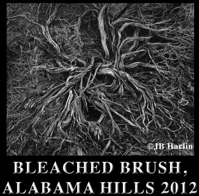 Bleached Brush